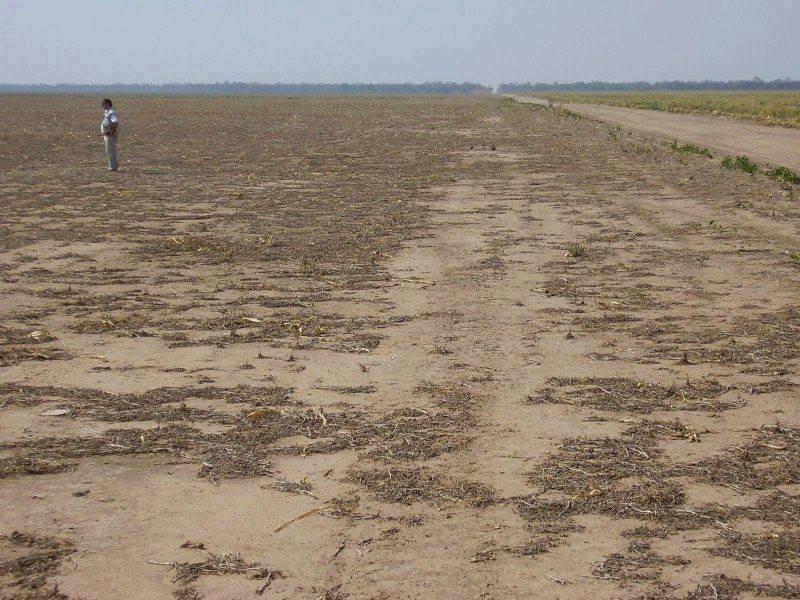 Campos tratados con herbicidas compuestos (glifosato + 2.4 D)